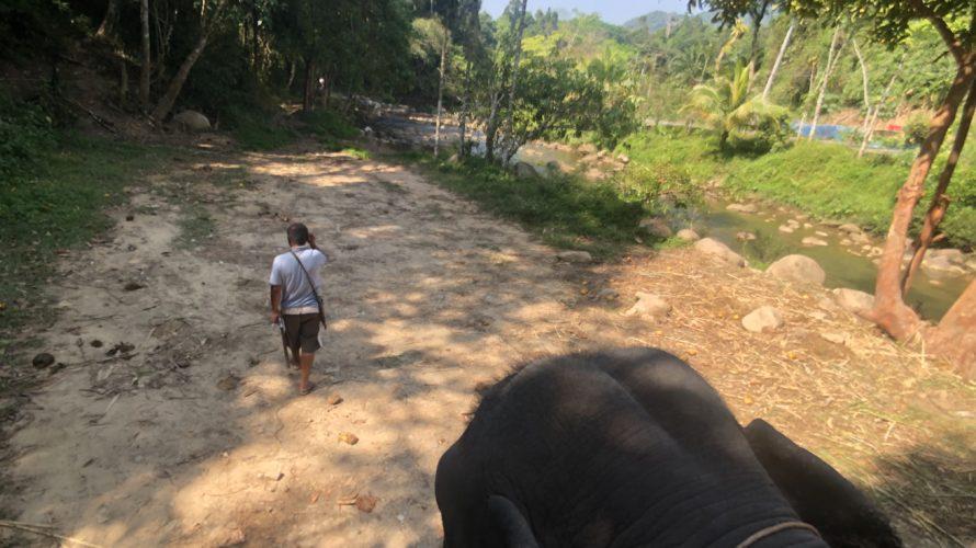 象に乗らねば見えない象の頭がめちゃかわいい!