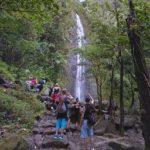 マノアの森と滝と、極上カフェ